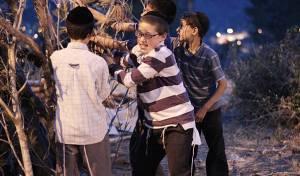 ילדי י-ם אוספים עצים; גלריה  מיוחדת