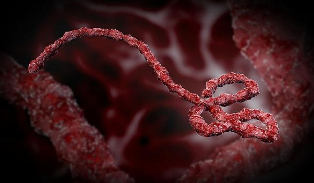 """חשש: חולה ה""""אבולה"""" הדביק ילדים"""