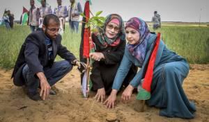 פלסטינים בנטיעות. אילוסטרציה