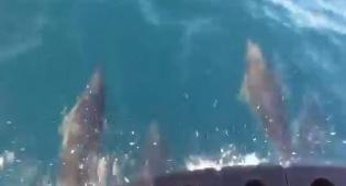 צפו:  הליווי המלכותי של הדולפינים  לעובדים
