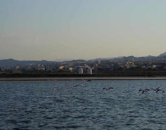 עופות פלמינגו בחופי אילת