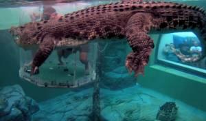 התנין לצד התיירים האמיצים - פחות התחברנו: הפארק שמציע בילוי עם תנין אימתני