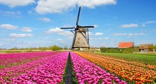 הנוף הפסטורלי ביותר שקיים. - לצאת לחופשה להולנד ולהיכנס לתוך ציור קסום
