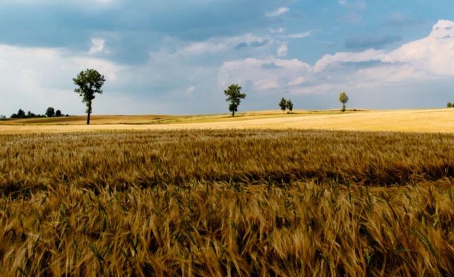 לטענת ההורים הבן אינו חקלאי והמשק יועד לבן אחר. אילוסטרציה