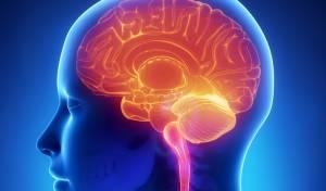 כך המוח שלנו מרמה אותנו