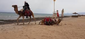 סיני, בחול המועד פסח