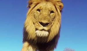 כך נראה העולם מלוע של אריה רעב