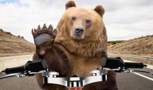 רק ברוסיה: דוב אימתני 'תפס טרמפ' על אופנוע