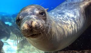 כלב ים משתלט על גלשן ותופס גלים