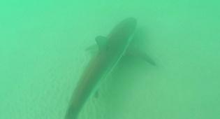 כריש תועד בתחנת הכוח של חברת החשמל