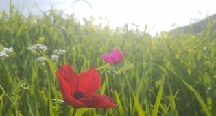 אביב הגיע פסח בא: גלריית אביב צבעונית
