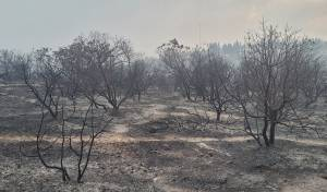 תיעוד: נזקי השריפה בשמורת הר טייסים