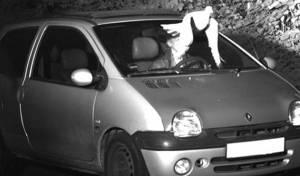היונה הצילה את הנהג מקבלת דוח מהירות