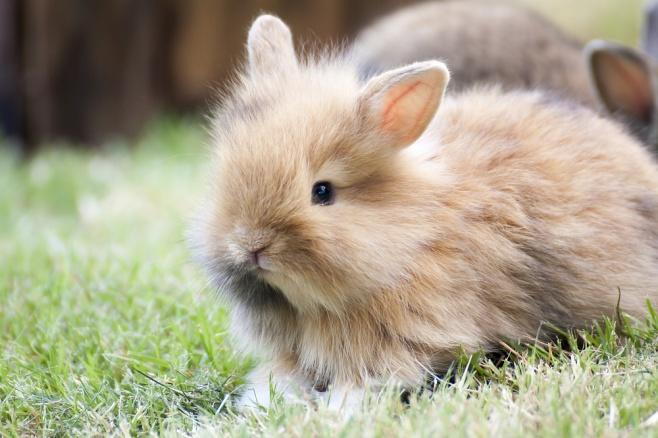 צפו: הארנבון שגילה את הפופקורן מתגנב לקערה