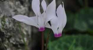 זר של חורף • גלריה חורפית של פרחים