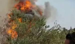 השריפה, מתחת לגינות סחרוב - שריפת היער התפשטה; נבדק חשד להצתה