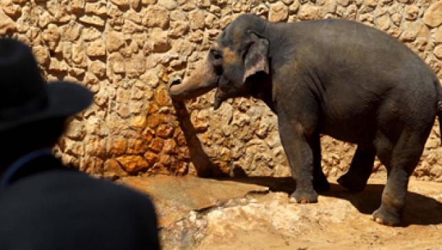 סיפור לשבת: הפיל שפחד מעצמו