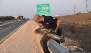 """אחת הרקטות שאותרו אתמול בגולן - צה""""ל: הירי מסוריה לא """"זליגה"""" - אלא מכוון"""