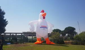 מול הכנסת: תרנגולת בגובה עשרה מטרים