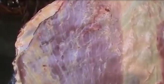 """בשר זה רצח? הפרה המתה ש""""זזה"""" • צפו"""