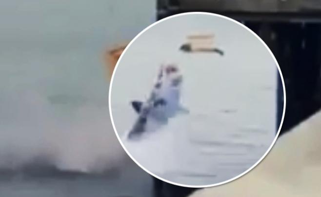 לא תאמינו מה קרה כשכלב הים החולה הוחזר למים