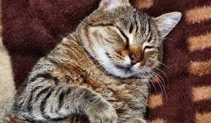 מאמן הכושר של החתול השמן: כלב