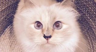 החתולה שופט שירשה השבוע 200 מיליון דולר