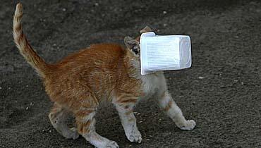 חתולה (צילום: פלאש 90)