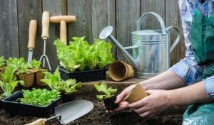 כך תיצרו גינת ירק בחצר הפרטית שלכם