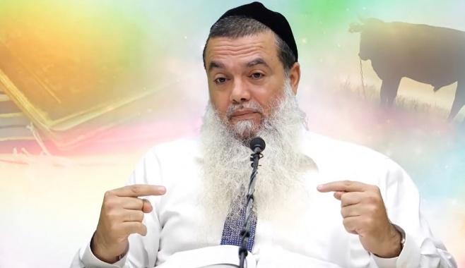 הרב יגאל כהן בוורט לפרשת חוקת • צפו