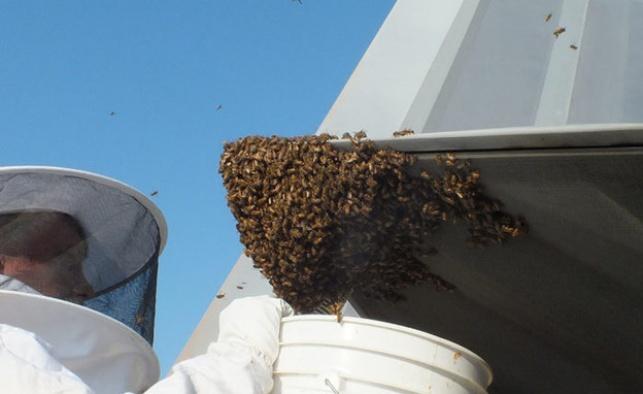 הדבורים במטוס