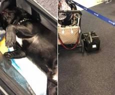 דייל של יונייטד איירליינס הביא למותו של גור כלבים