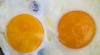 """אילוסטרציה - """"פטנט המאה"""": ביצה טבעונית זמינה למאכל"""