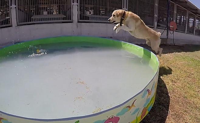 """הכלבים של המג""""בניקים זכו ליום כיף • צפו"""