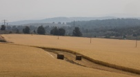 שדה חיטה ליד לטרון - התחזית: נאה, ללא שינוי ניכר בטמפרטורות