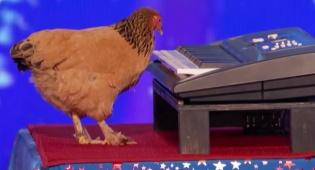 כבש את השופטים: עוף ניגן את השיר הפטריוטי