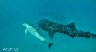 הכריש והלווייתנים נפגשו במהלך הסגר. צפו