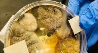 הצלחת המדוגמת לאחר 48 שעות - כמויות של חיידקים במתקן לייבוש ידיים