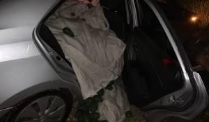 """מאות ק""""ג אבוקדו גנוב נתפסו לאחר מרדף"""