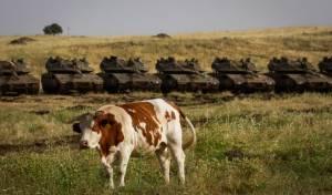 פלסטיני גנב פרות מיהודי, נפל ומת במקום