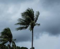 """הדקלים ברוח העזה - סופת ההוריקן """"אירמה"""" הגיעה לפלורידה"""