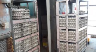 תבניות ביצים