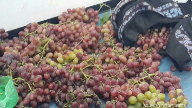 הענבים שנתפסו