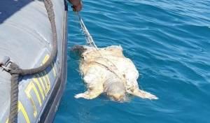 הפקחים חילצו רשת שהפכה למלכודת ימית