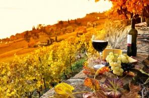 נוף בראשית, יין משובח וריח תורה: היקב באור הגנוז
