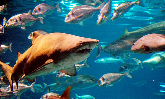 אימה באשדוד: כריש נשך גבר בידו