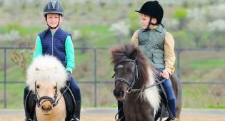 מחקר: רכיבה על סוסים משפרת את האינטליגנציה