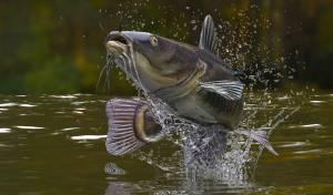 השפמנון - דג לא כשר