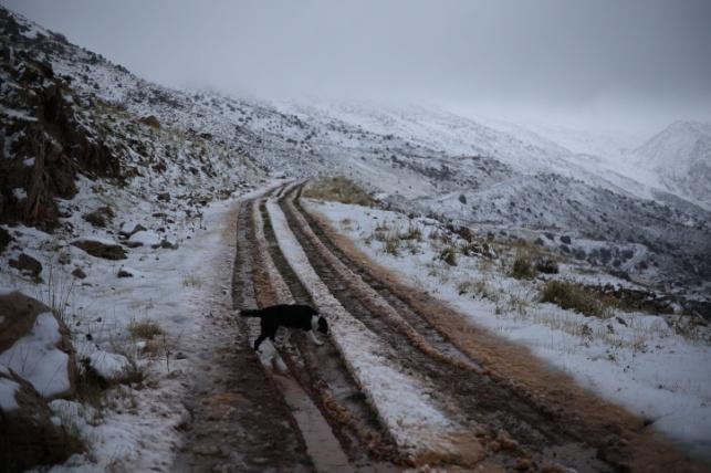 שלג ליד מג'דל שאמס