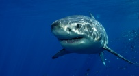 כלה שיצאה לחופשה בקריביים הותקפה על ידי כריש